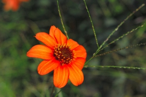 The orange flowers int he garden are reminders of cooler nights.