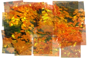 The colors of fall slightly twisted