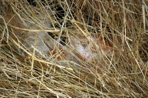 The hay bale is a cozy spot to hide and stay warm out of the wind.