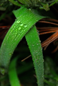 THe crisscross of the leaves & droplets